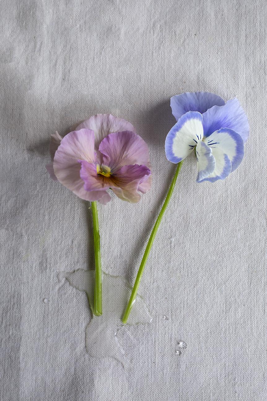 Aesme Flower Studio | Pansies