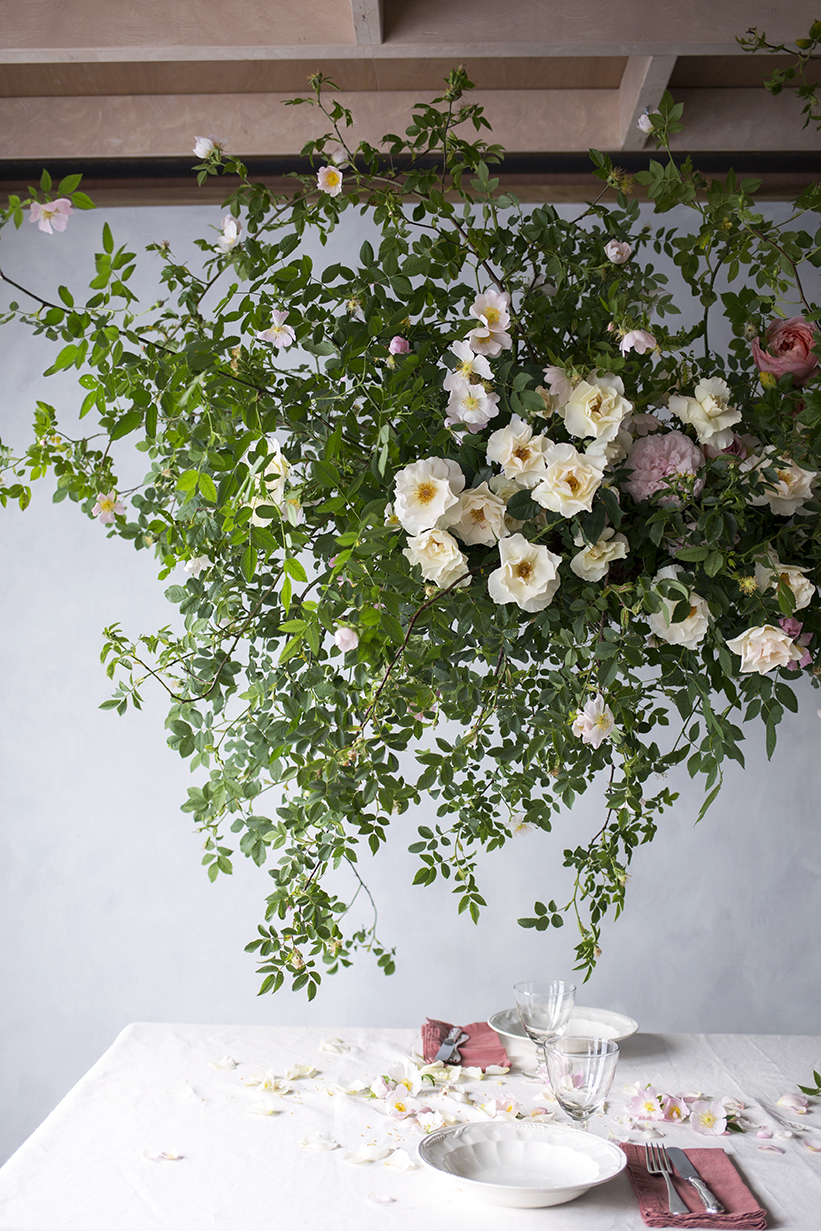 An installation of suspended dog rose and garden roses, early June.