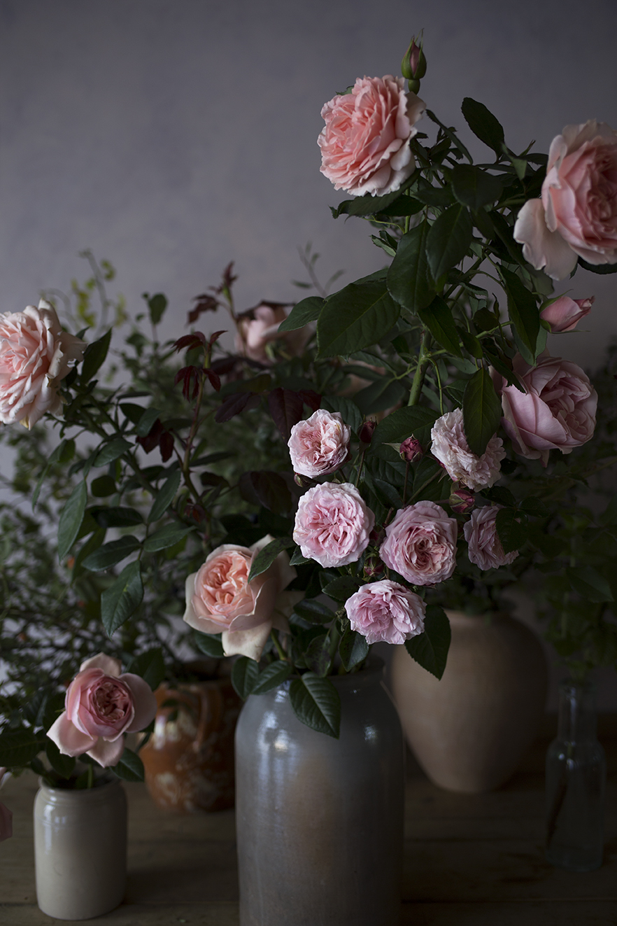 Roses - 'Maxima Romantica', 'Aphrodite' and 'Sweet Antike' and foraged rosehips in the studio.