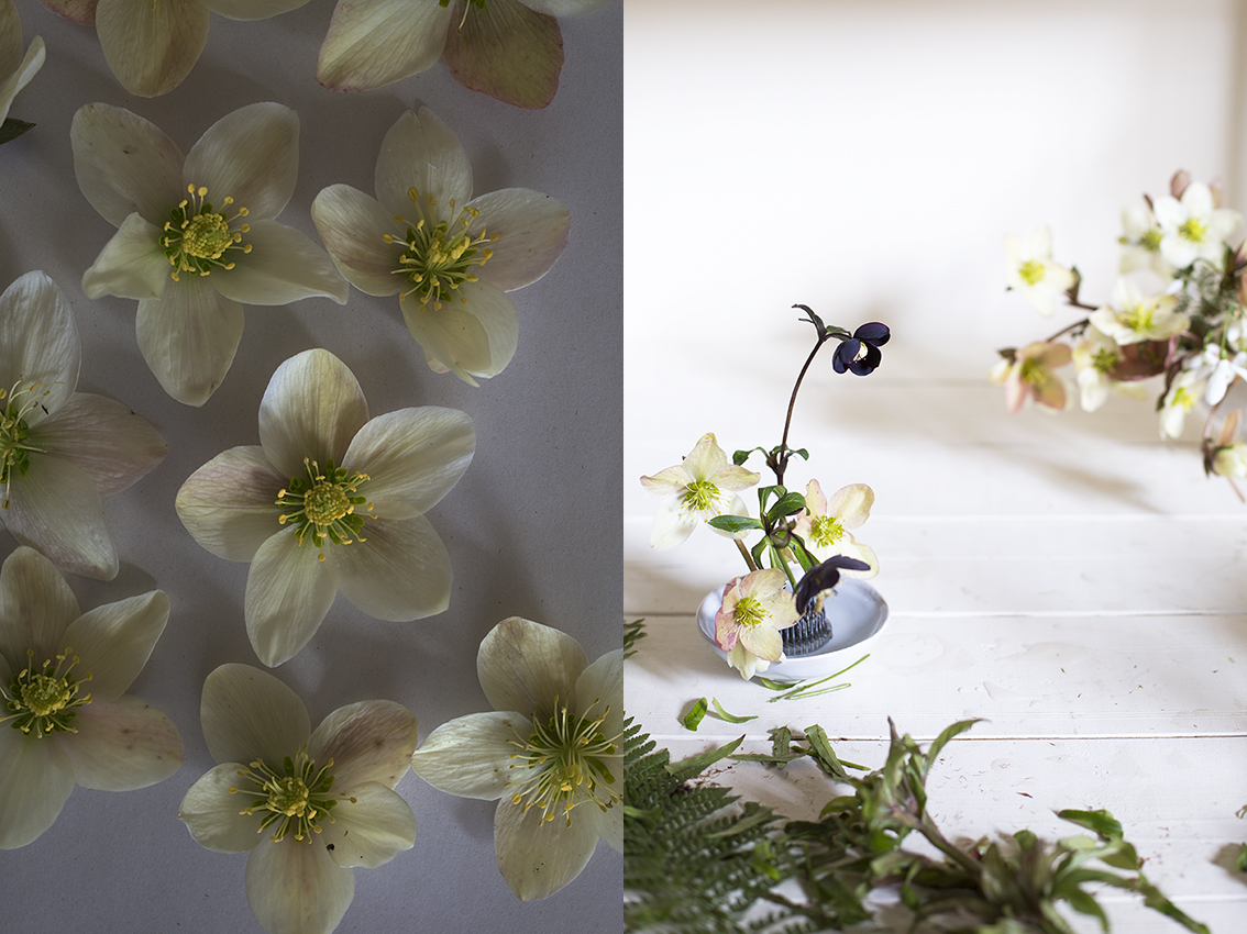 Hellebore flower arrangements | Aesme Studio London