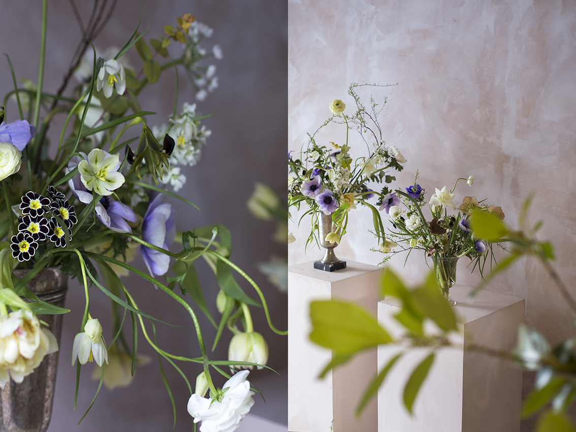 Light spring arrangements to dress an apartment in Kensington for an interiors shoot earlier in the month designed by  Olivia Outred . Featuring tulip 'Verona', velvety brown Iris tuberosa (widow iris) from Cornwall and Primula 'gold lace'.