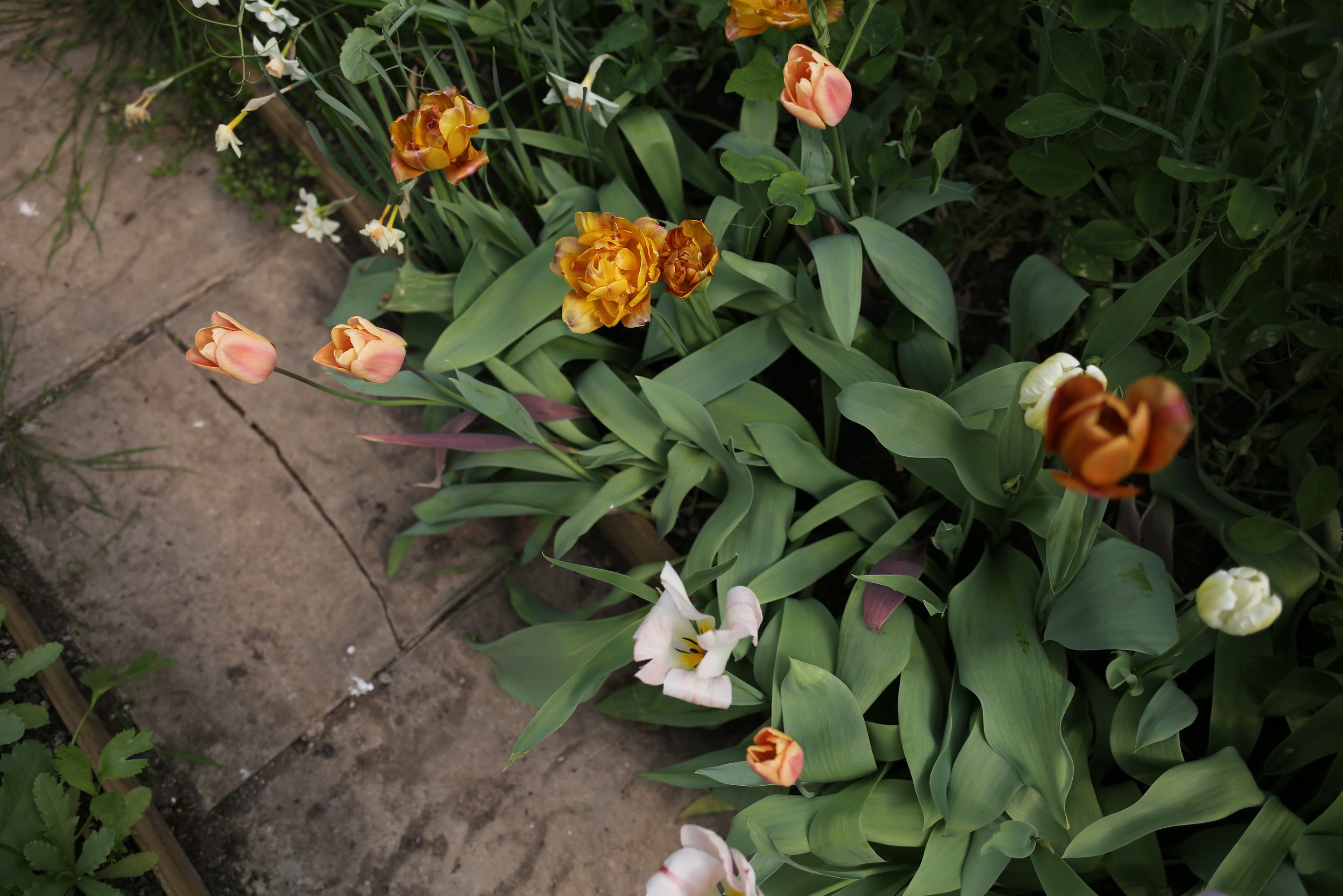 Spring flowers | Aesme Flower Studio London