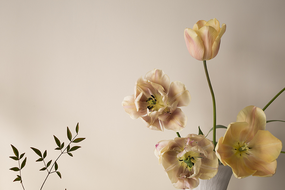 Flower Studio | 'Belle Epoque' tulips, at their most beautiful as they fade and crumple