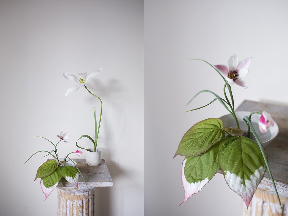 Flower Studio | Actinidia kolomikta (variegated-leaf hardy kiwi) with tulip Clusiana 'peppermint stick'