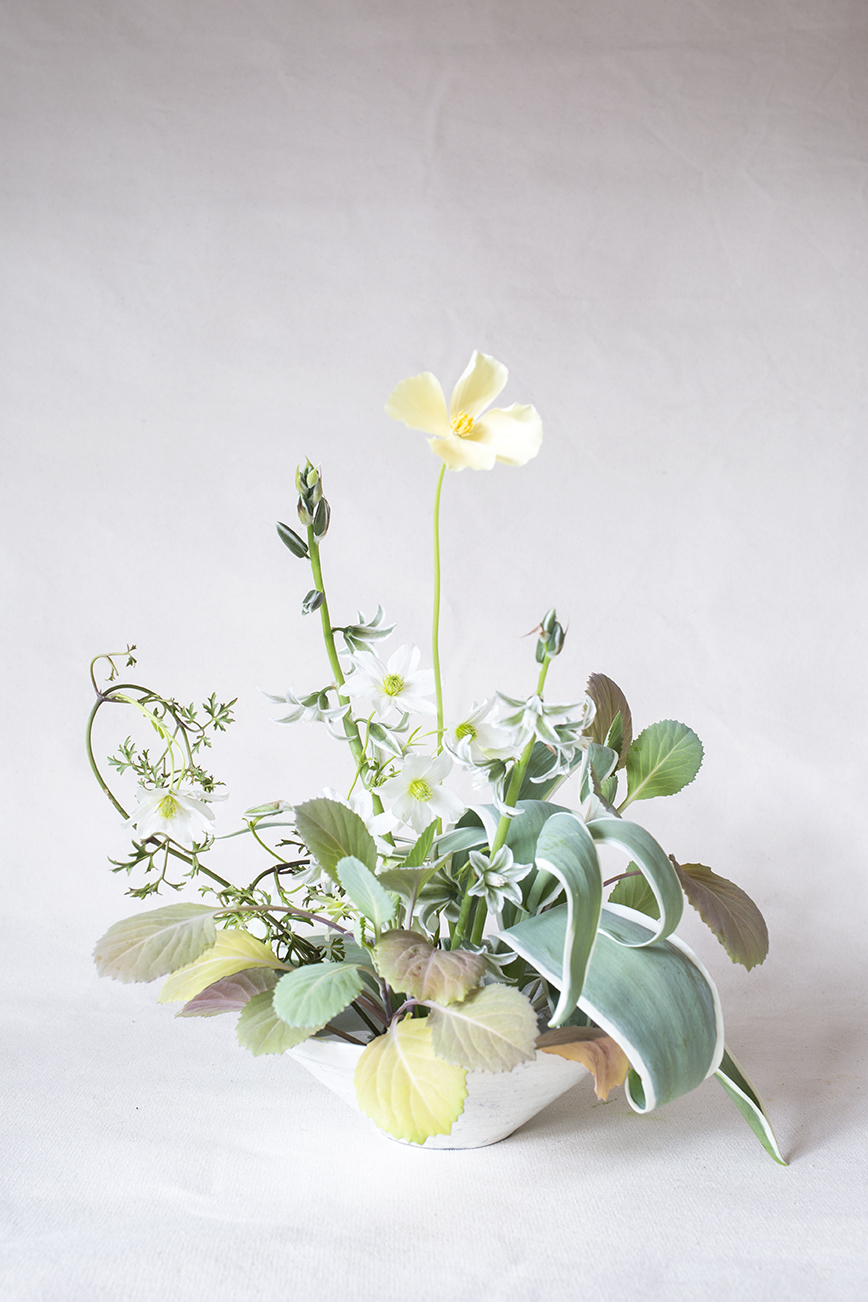 Materials | Cabbage & variegated tulip leaves, clematis, Californian poppy, Ornithogalum nutans