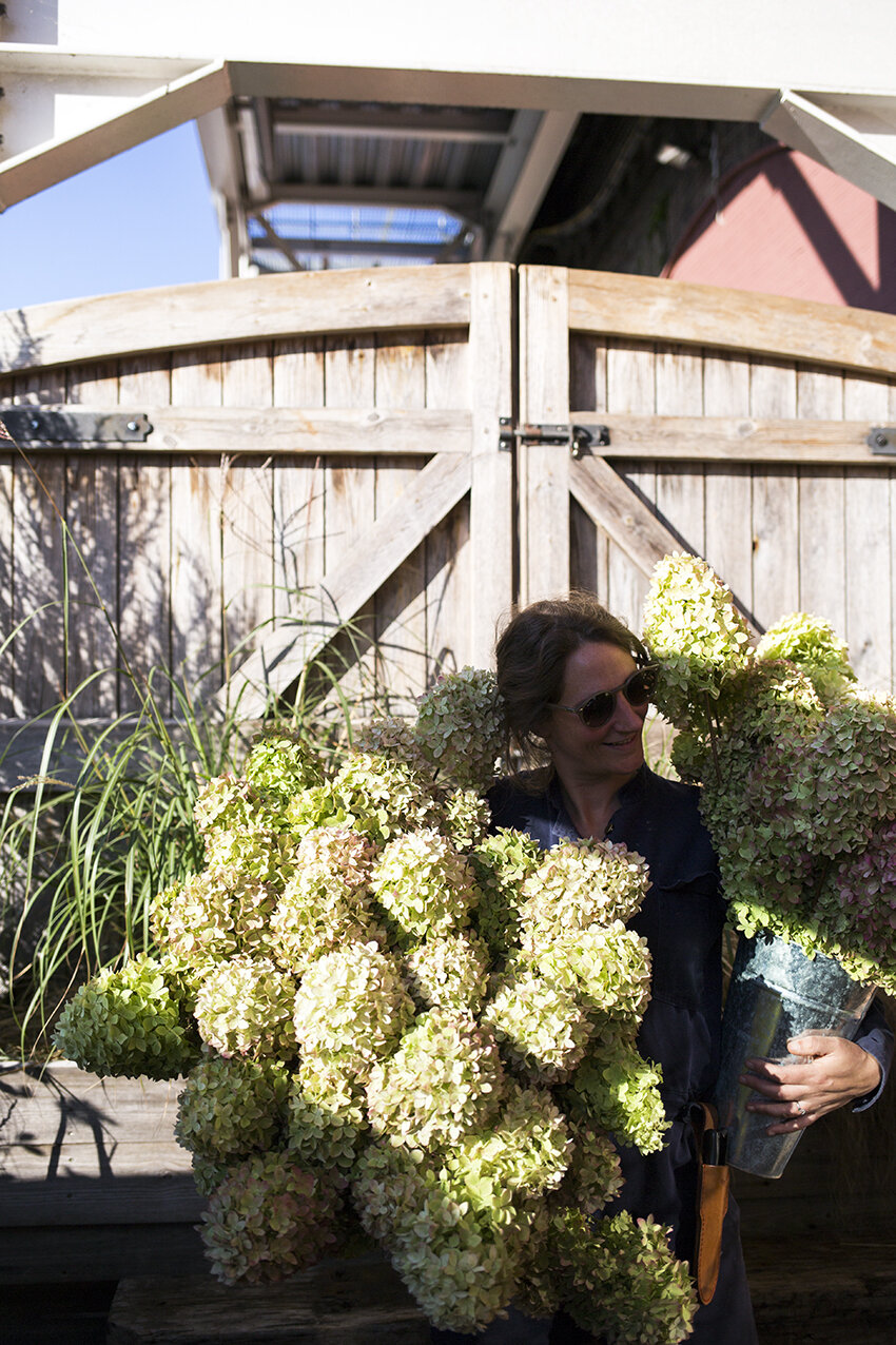 Armfuls of amazing Hydrangea Paniculata from  The Real Flower Company