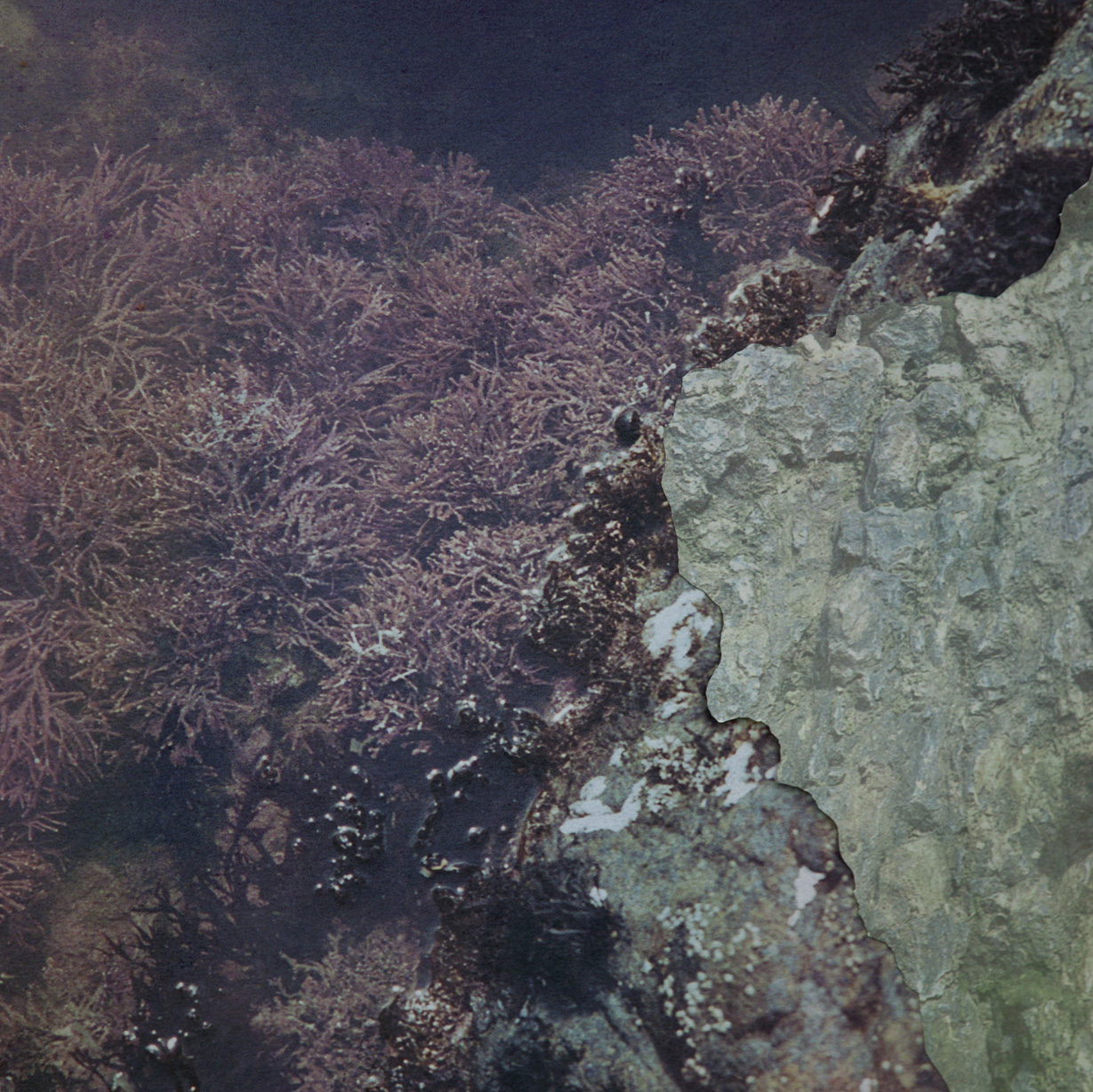"""Tidal Pool III detail,  archival pigment prints, collage on panel, 54"""" x 43"""", 2012."""
