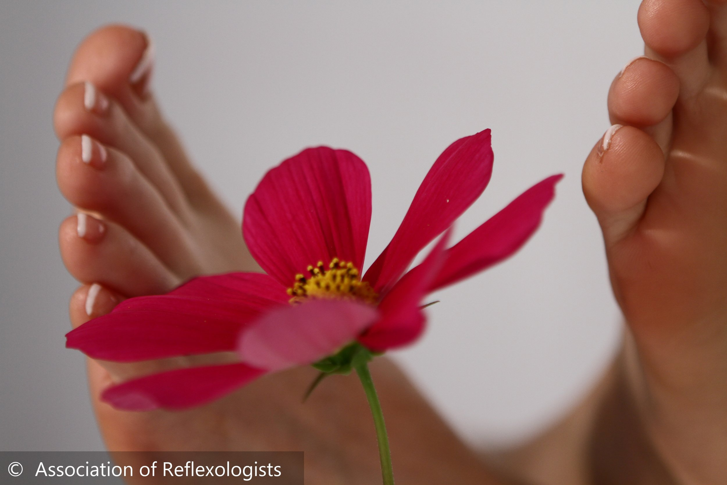 aroma reflex 1.jpg