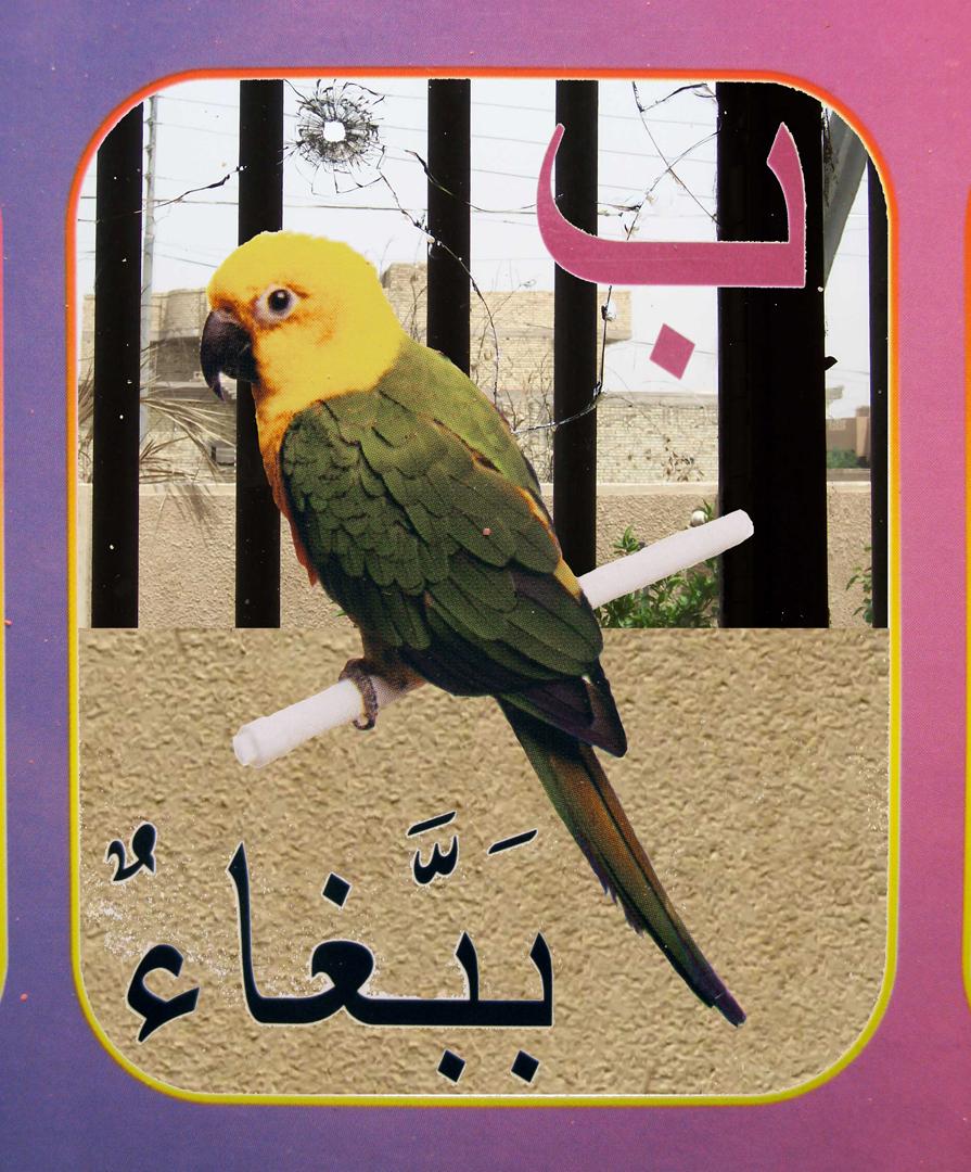 2. parrot flat.jpg
