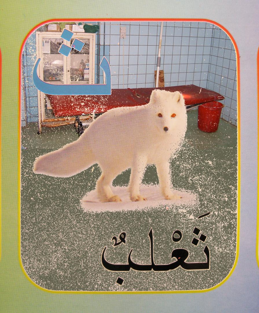 4. snow fox flat.jpg