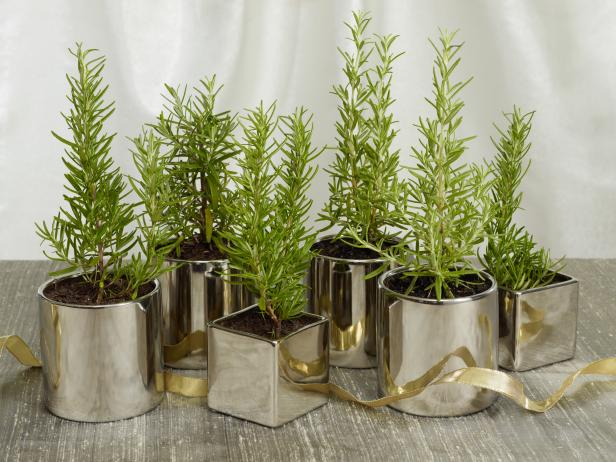 christmas-holiday-centerpiece-ideas-rosemary-trees-unique