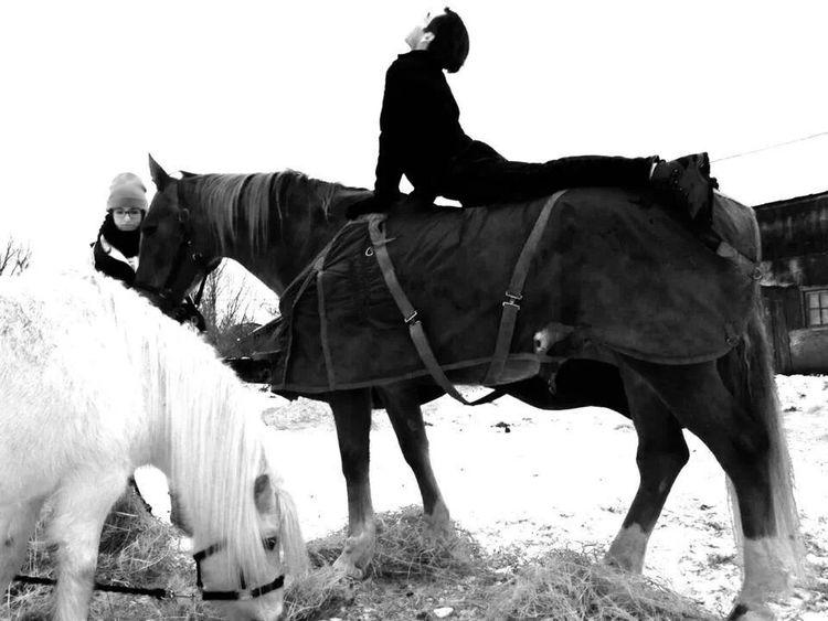 Horses 6.jpg