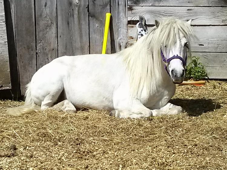 Horses 5.jpg