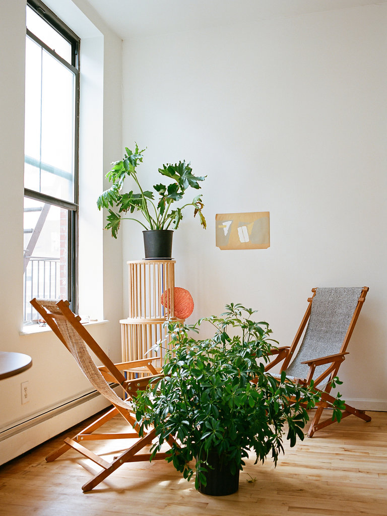 First thing I'm doing when I get my next apartment is finding greenery.  Photo by Brian W. Ferry for NY Times Magazine