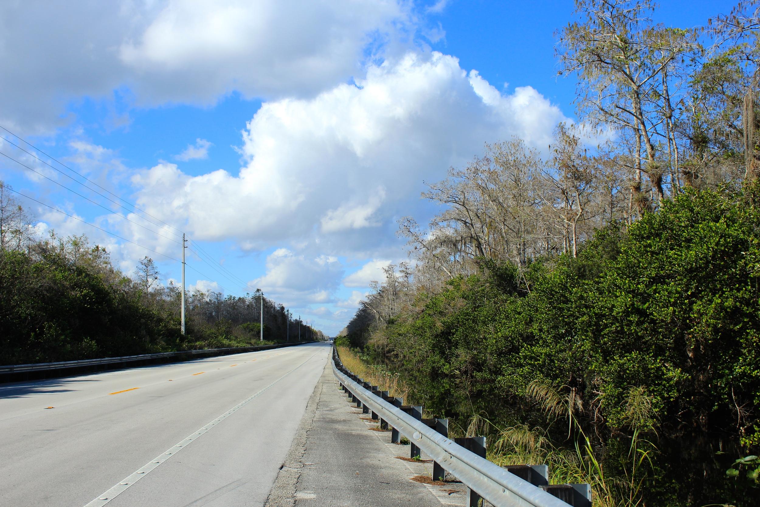 Everglade Roadside