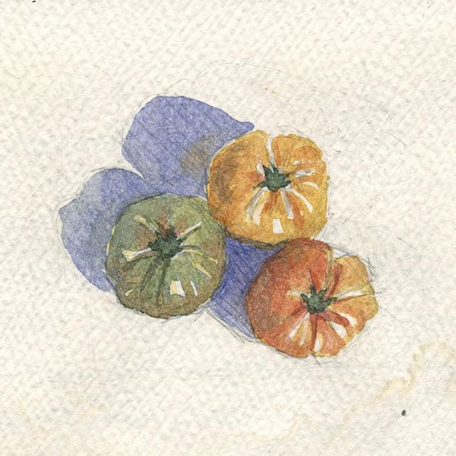 Heirlooms, 2013 #tbt #heirloomtomatoes #tomatoes #tinypainting #watercolorpainting