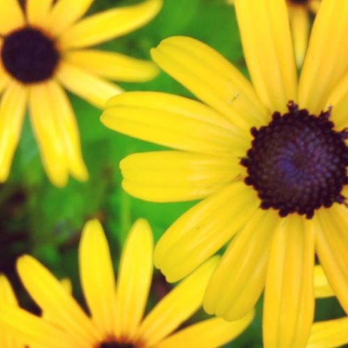 trio of flowers.JPG