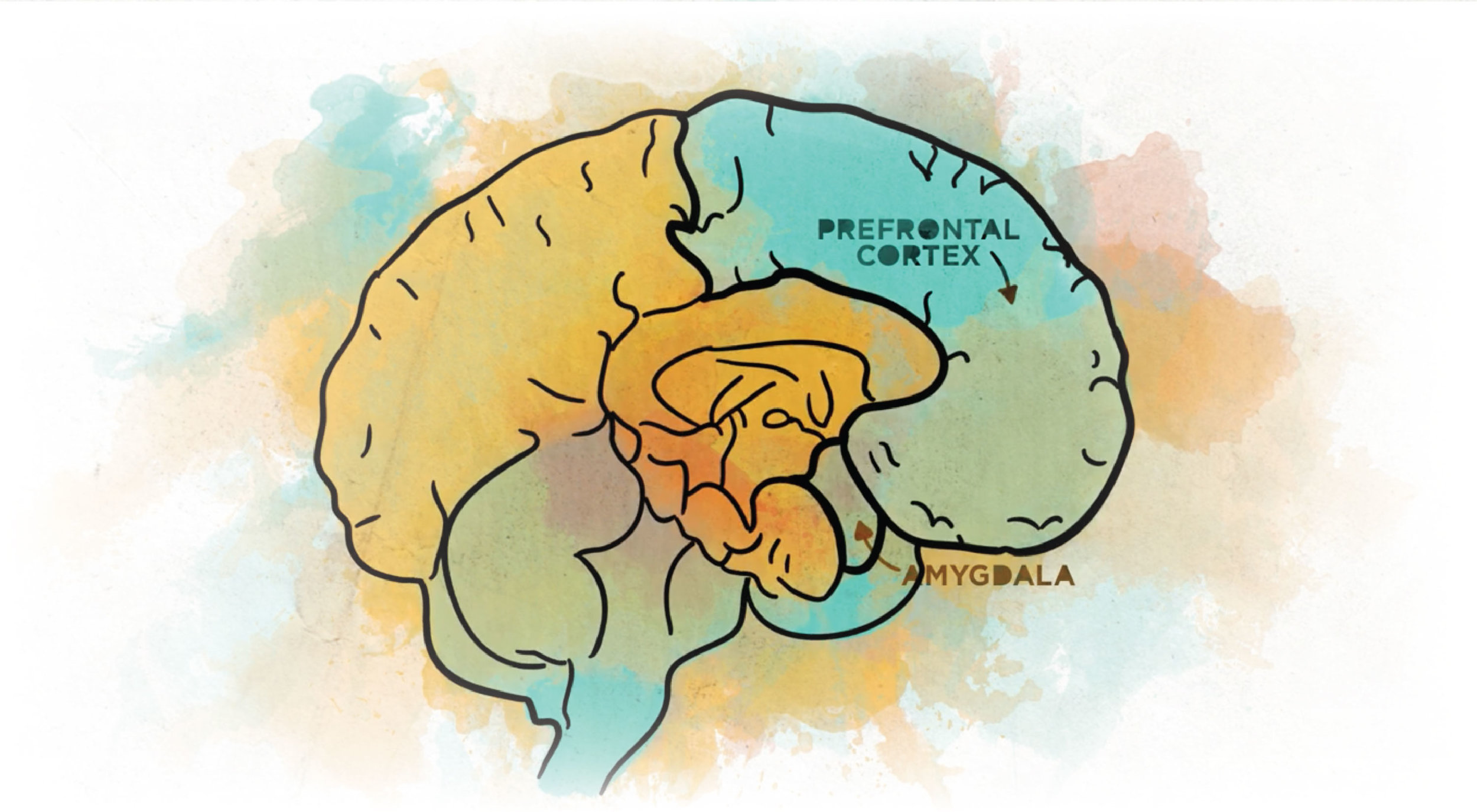 Creative brain - When you do art and create you are actually making neuro-pathways in your brain that help you regain access to your critical thinking center, and with that normal self-awareness, emotion regulation, and interpersonal skills.