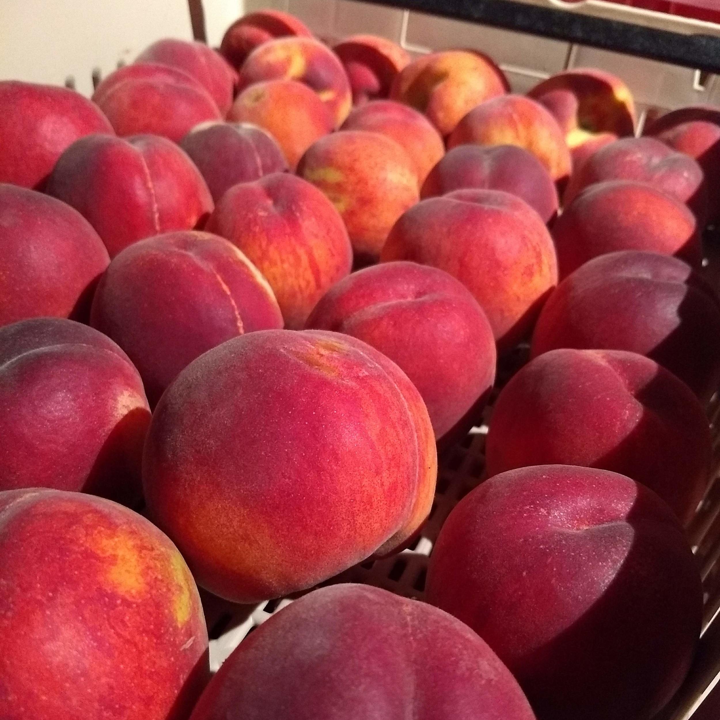 Springcrest Peaches