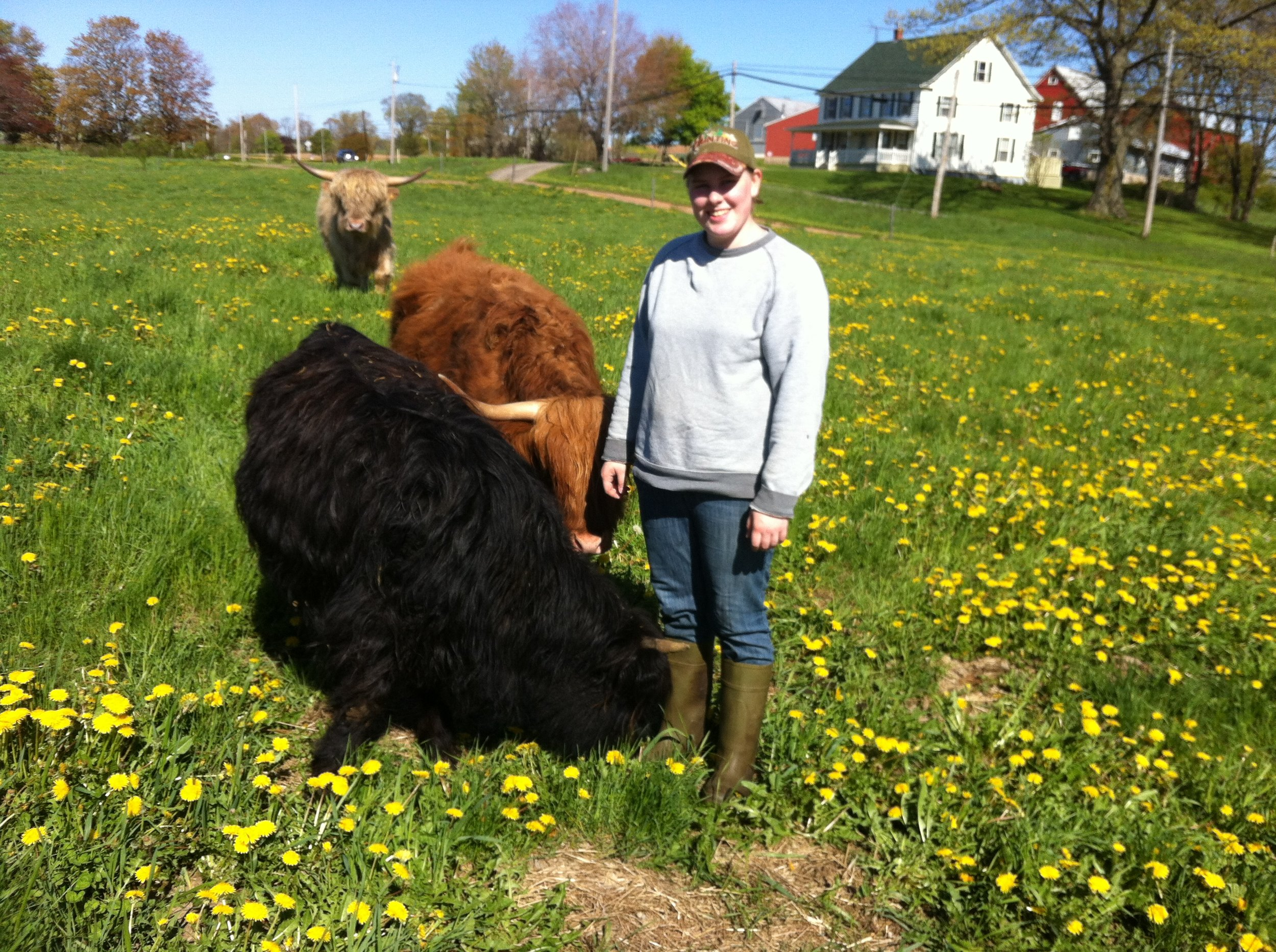 Me visitng my cattle at my family's farm in Grand Pre, NS.
