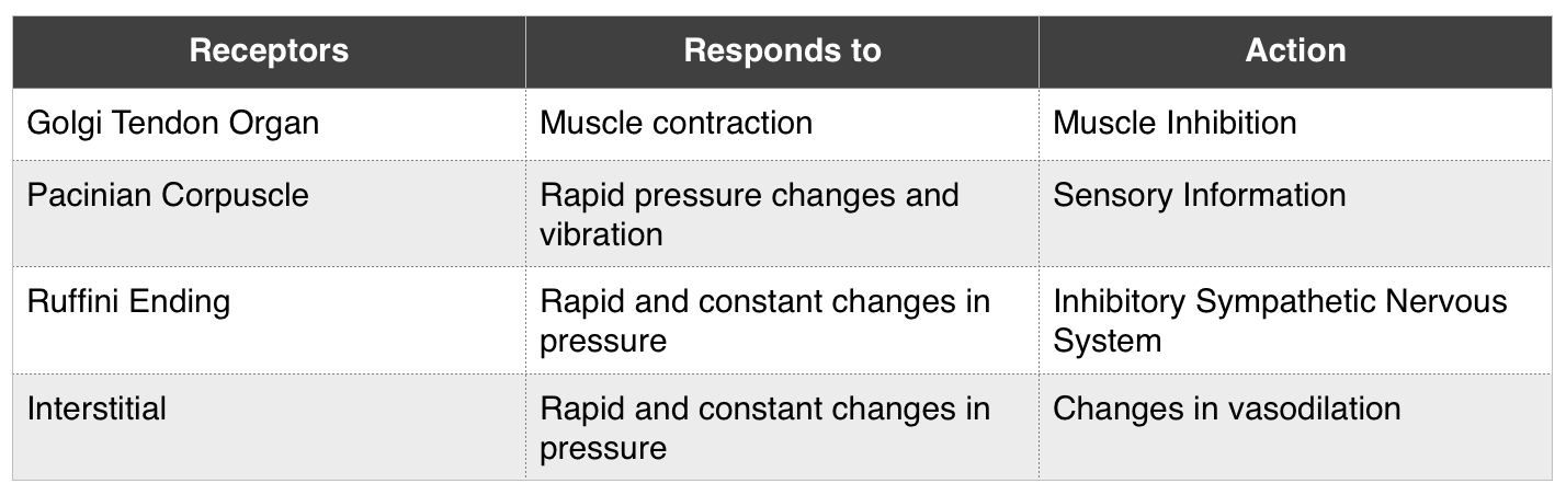 Here are a few of the common mechanical receptors in the body.