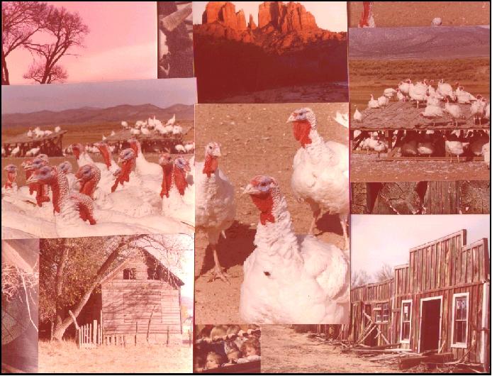 Copy of image1FB.JPG