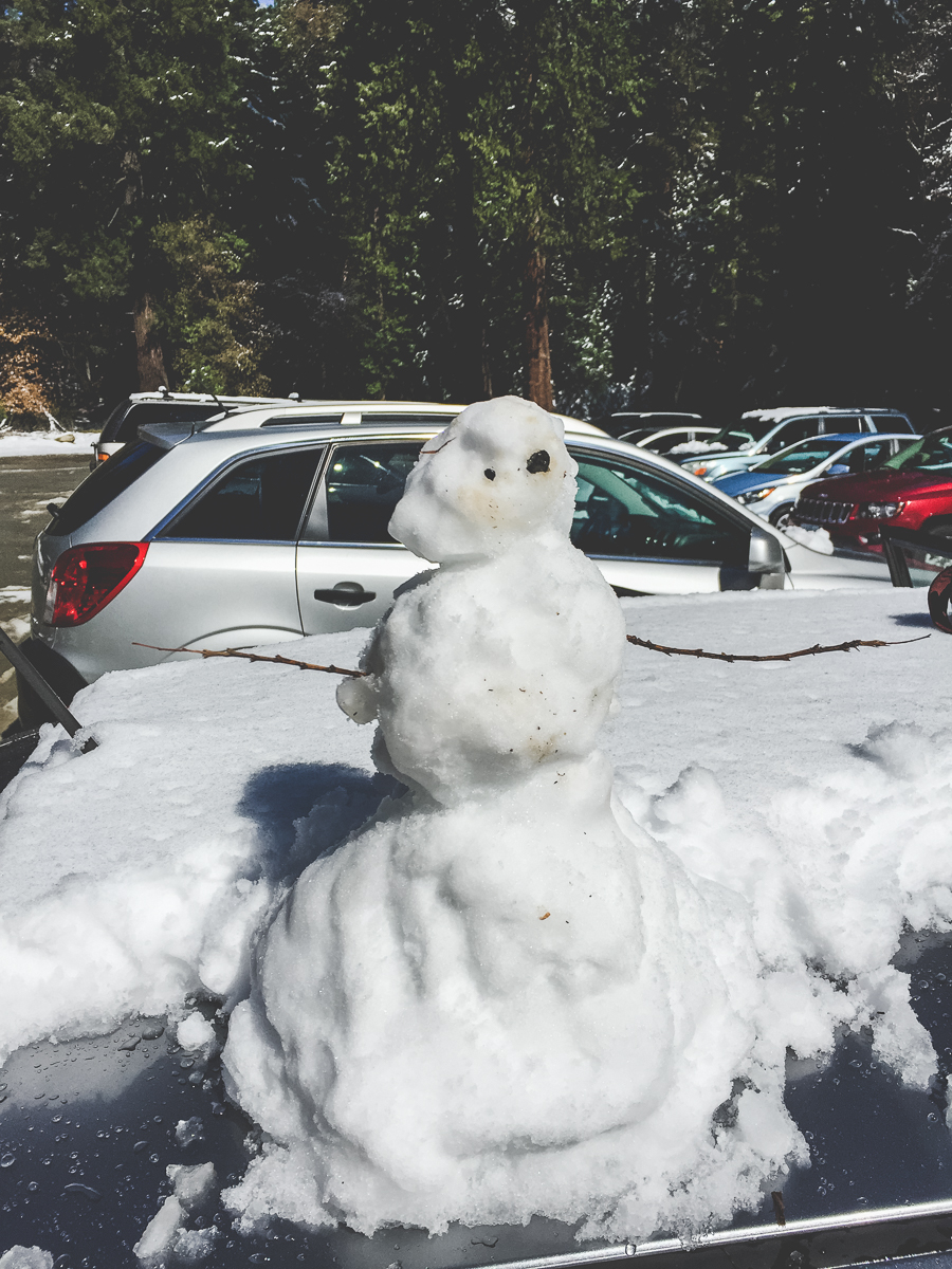 I forget what we named our snowman friend. Oh well, best not get attached. He was gone within an hour.