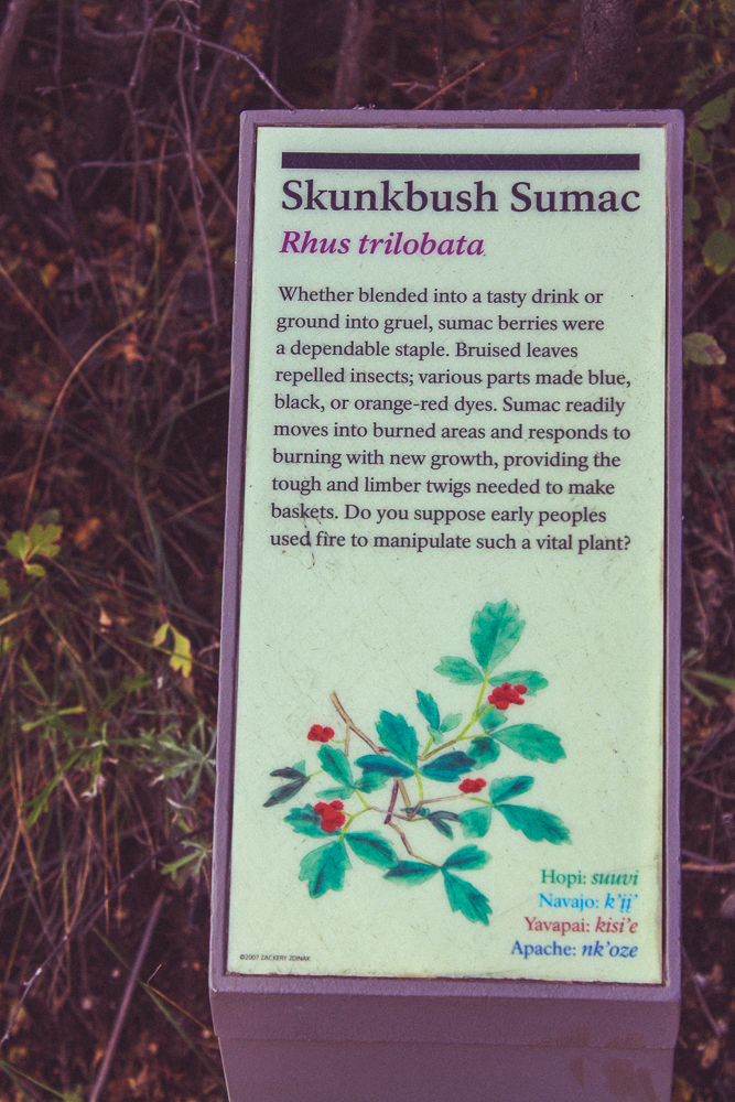 Sumac! I got way more excited than I should have when I saw this.  Persians sprinkle dried sumac over their food for a tart flavoring.