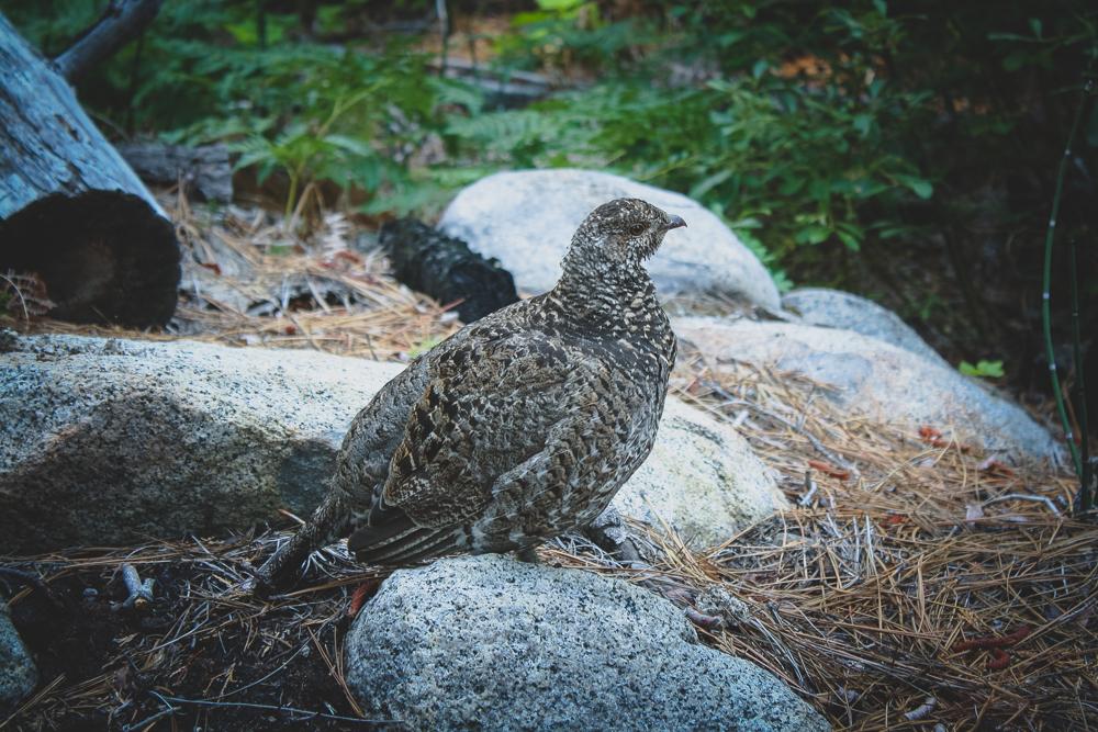 A curious bird we got close to.