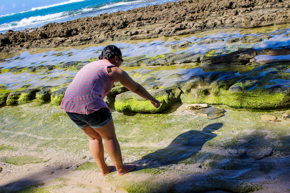 Looking for life at the Waiale'e Bach Park. I think the tide was too aggressive for anything to stick.