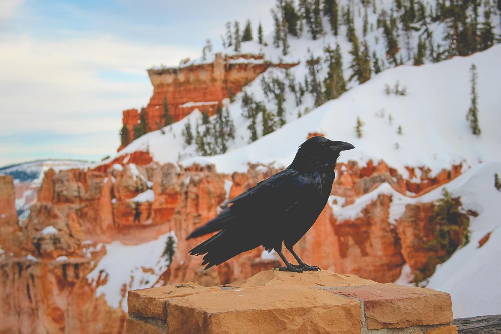 Sassy crow.