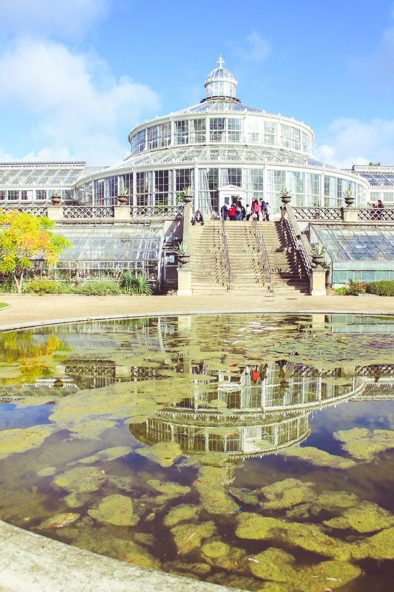 It was actually very cool to visit an old-school greenhouse. Reminded me of an old world's fair or Victorian wealth.
