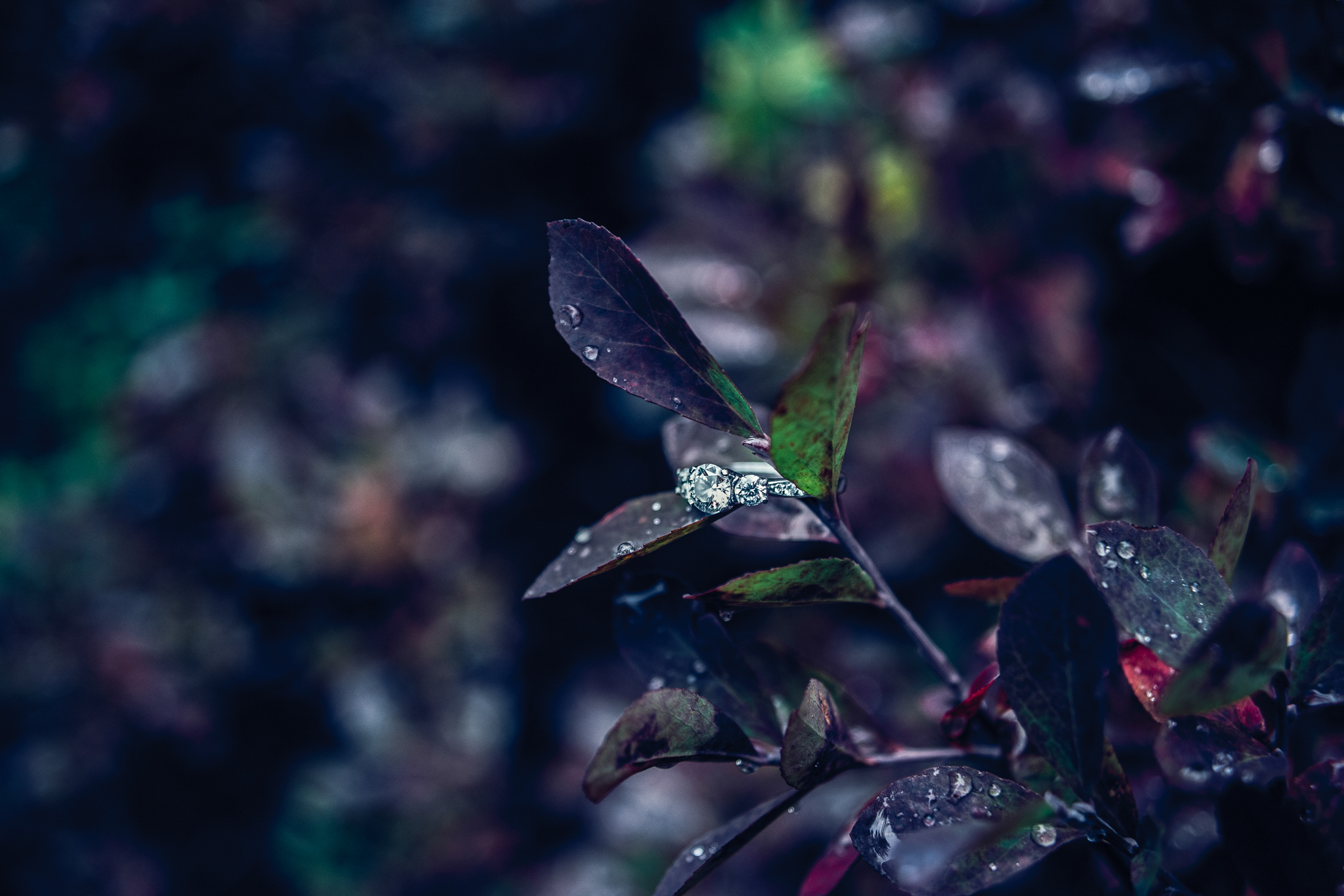 Rainier Engagement-001-3.JPG