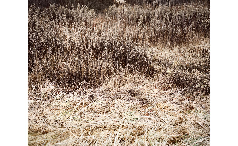 winterwiese.jpg