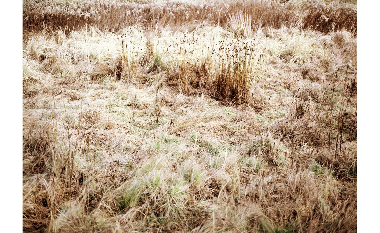 winterwiese1.jpg