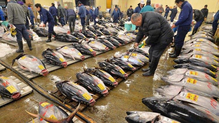 HOW TO ENJOY THE TSUKIJI FISH MARKET
