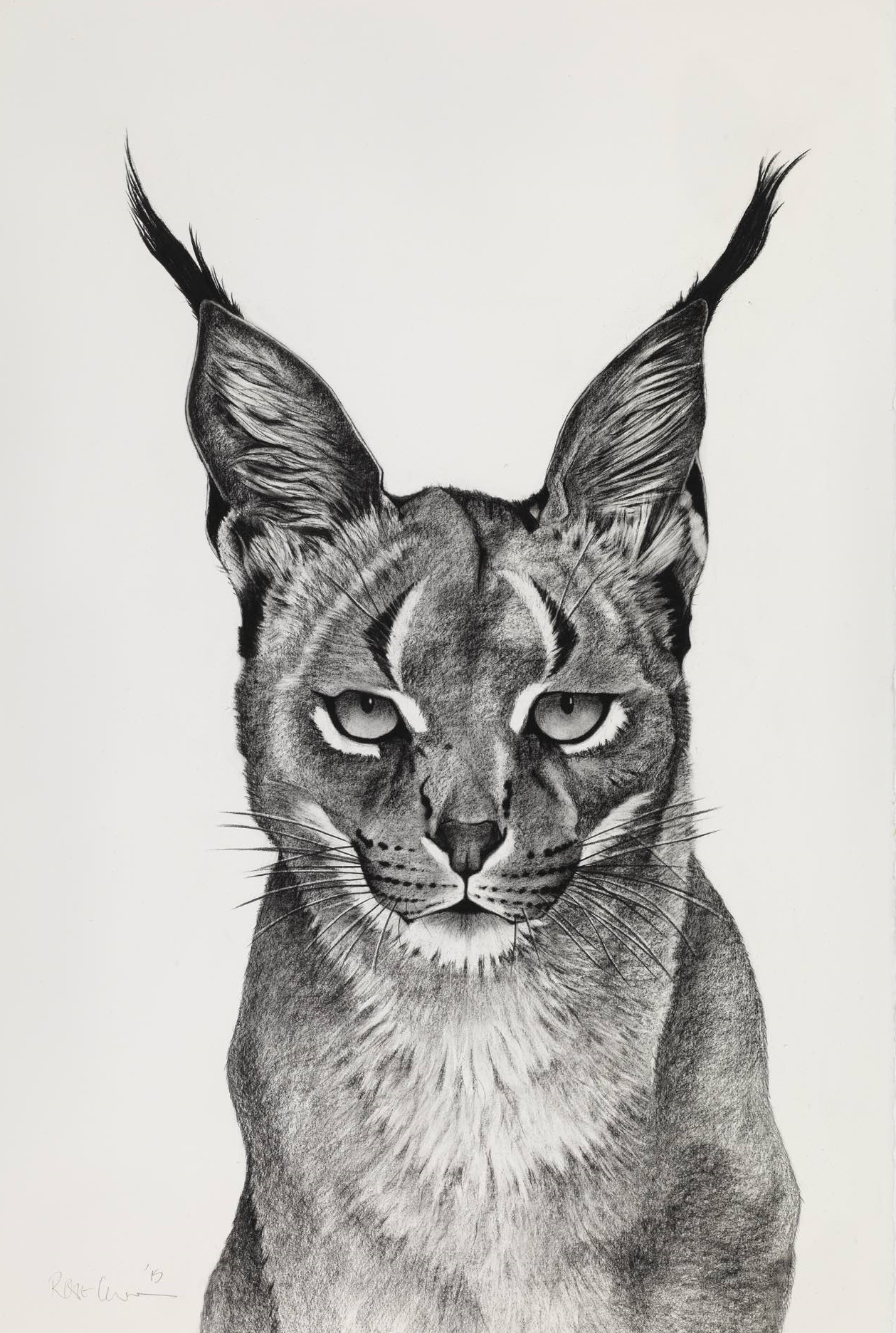 5. Caracal Observing