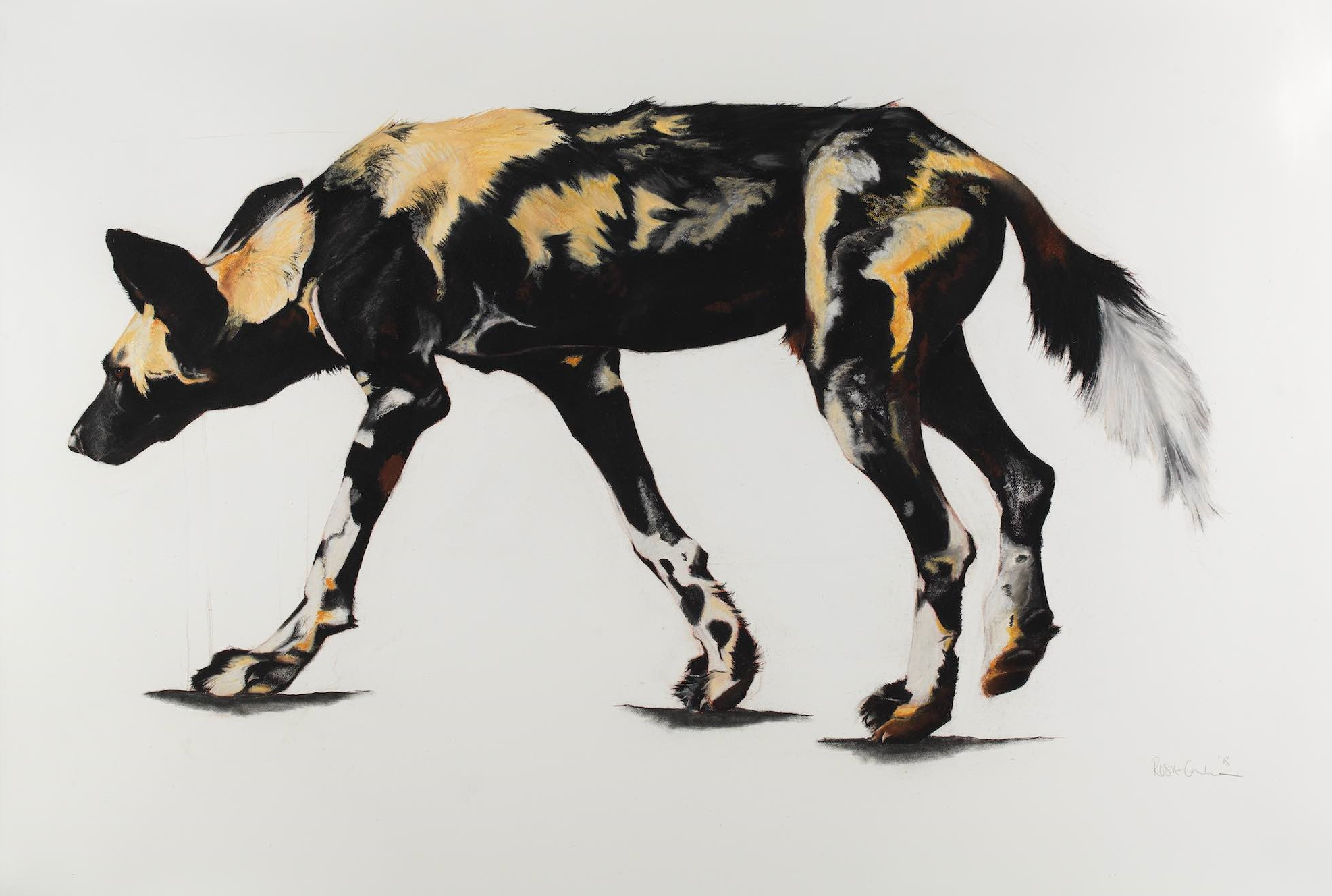20. LARGE AFRICAN WILD DOG II
