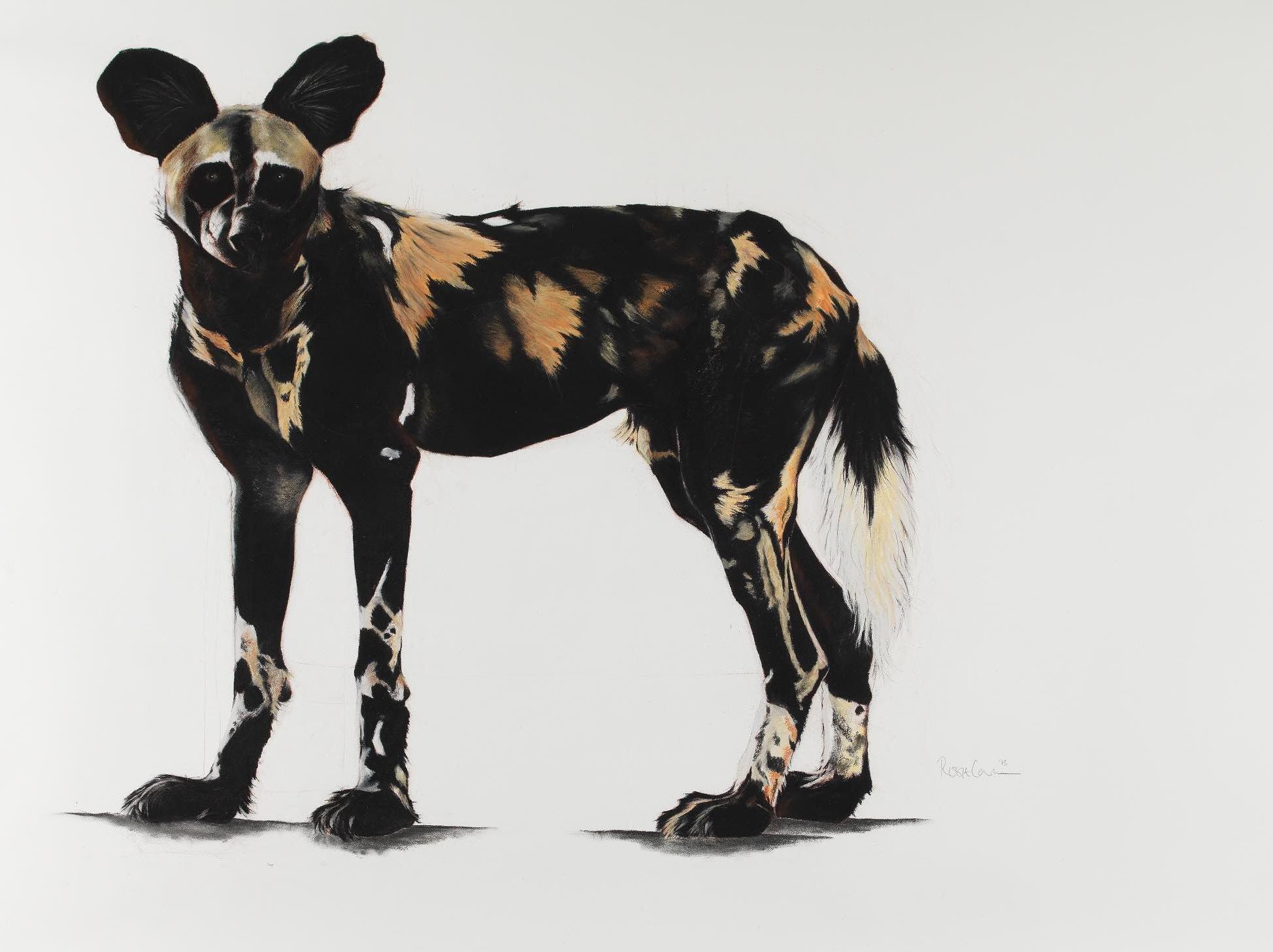 19. LARGE AFRICAN WILD DOG I