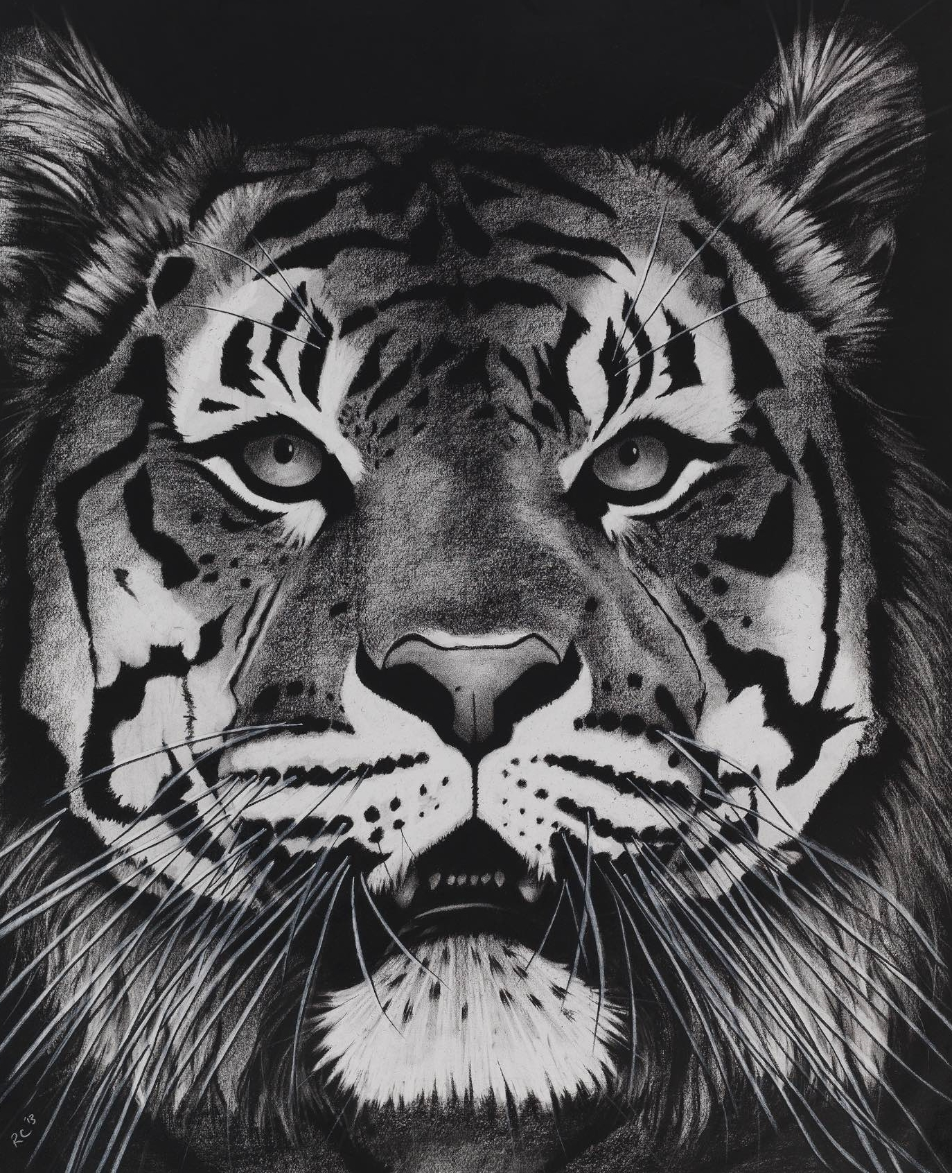 15. TIGER ON BLACK MOUTH OPEN