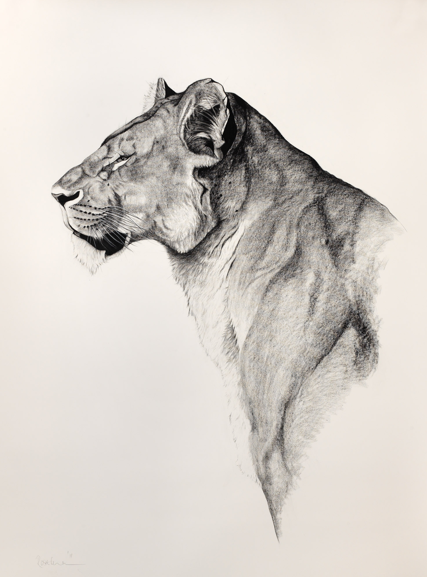 Lions    View Gallery