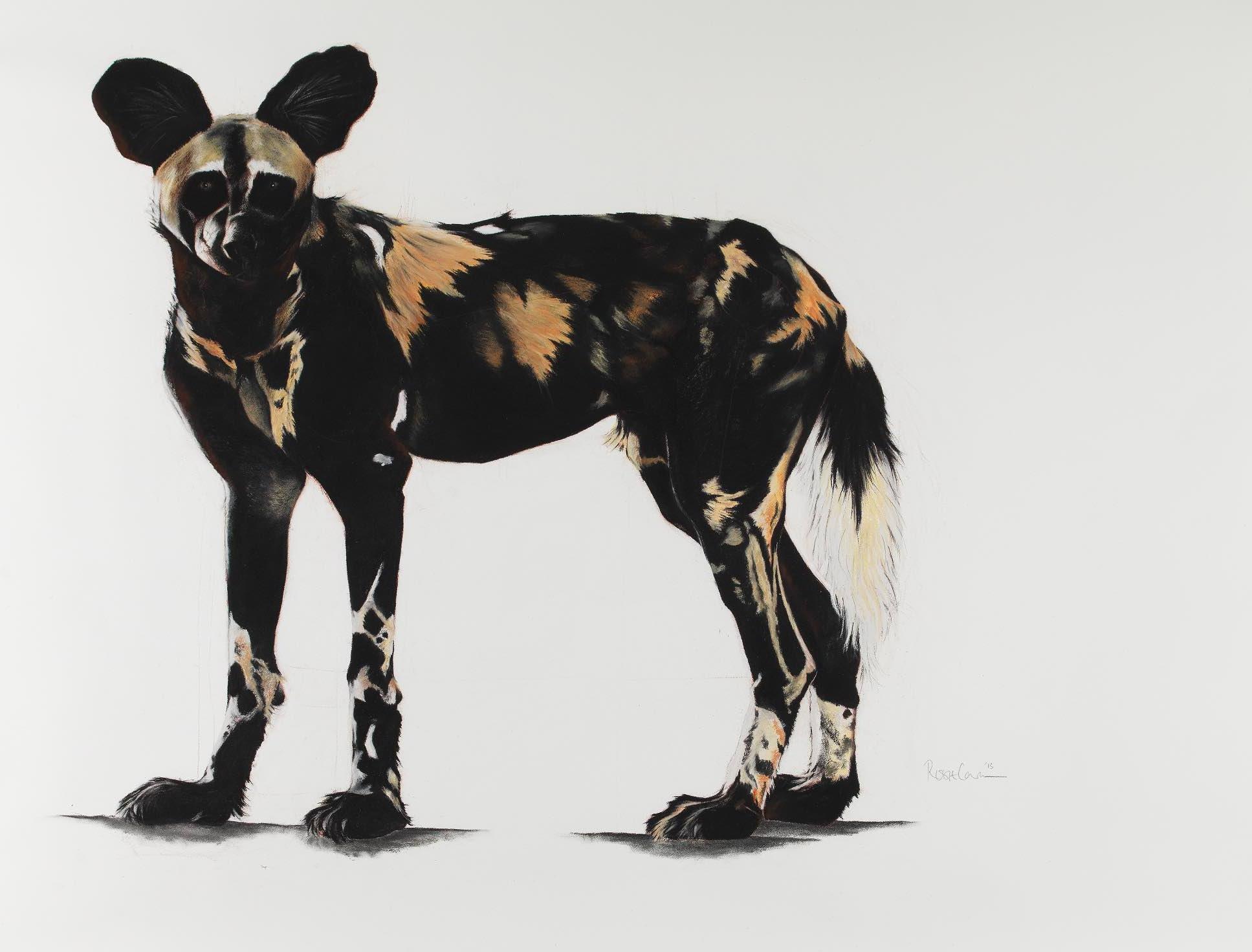 Large African wild dog I.jpg