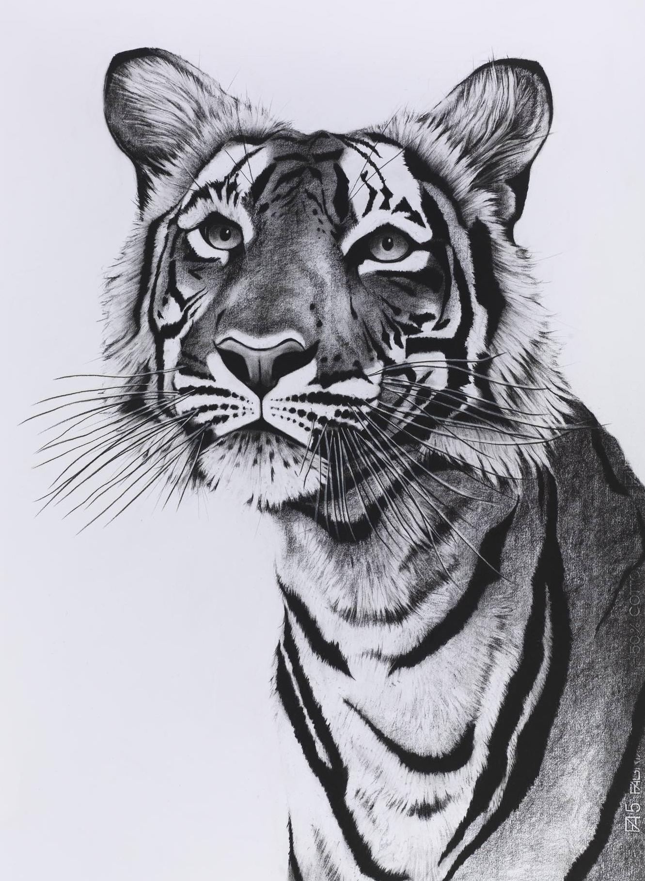 Tiger Portrait posing.jpg
