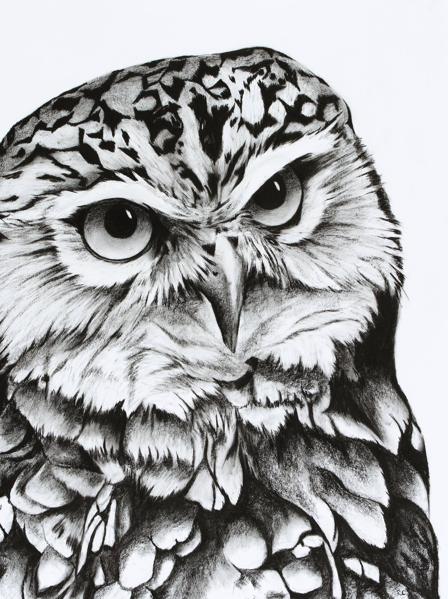 Burrowing Owl.jpg