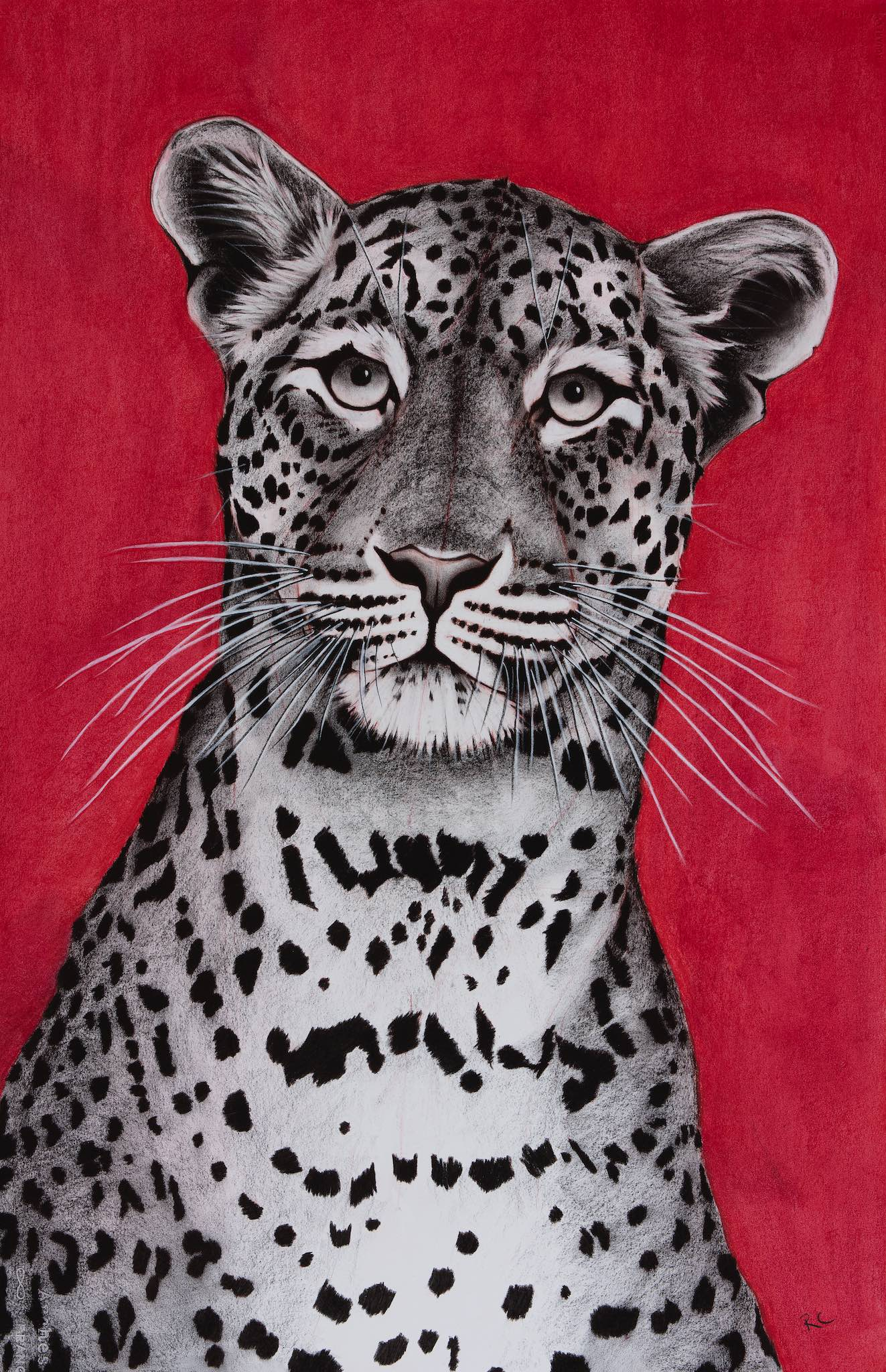 Leopard on Red.jpg