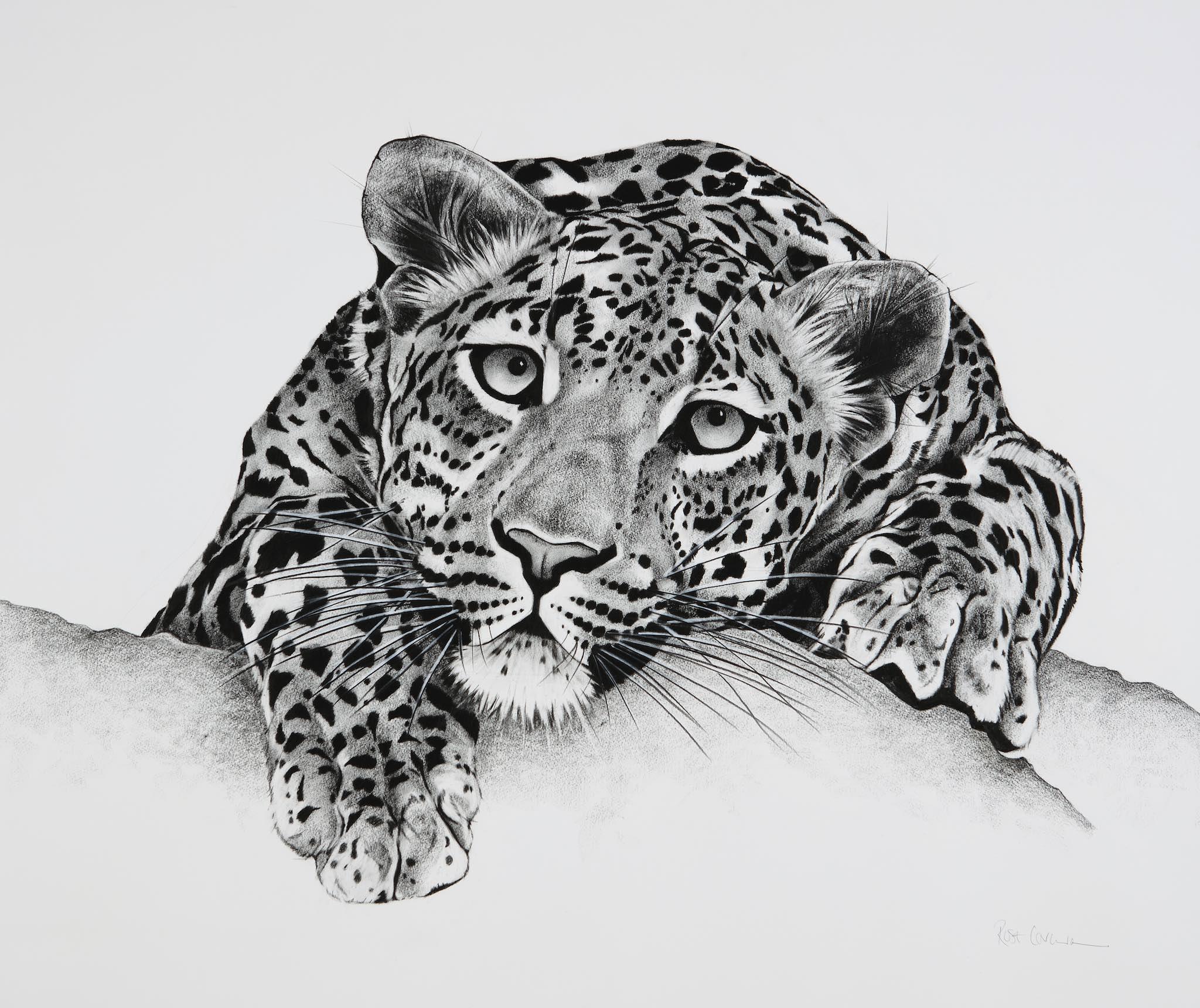 Leopard on Rock.jpg