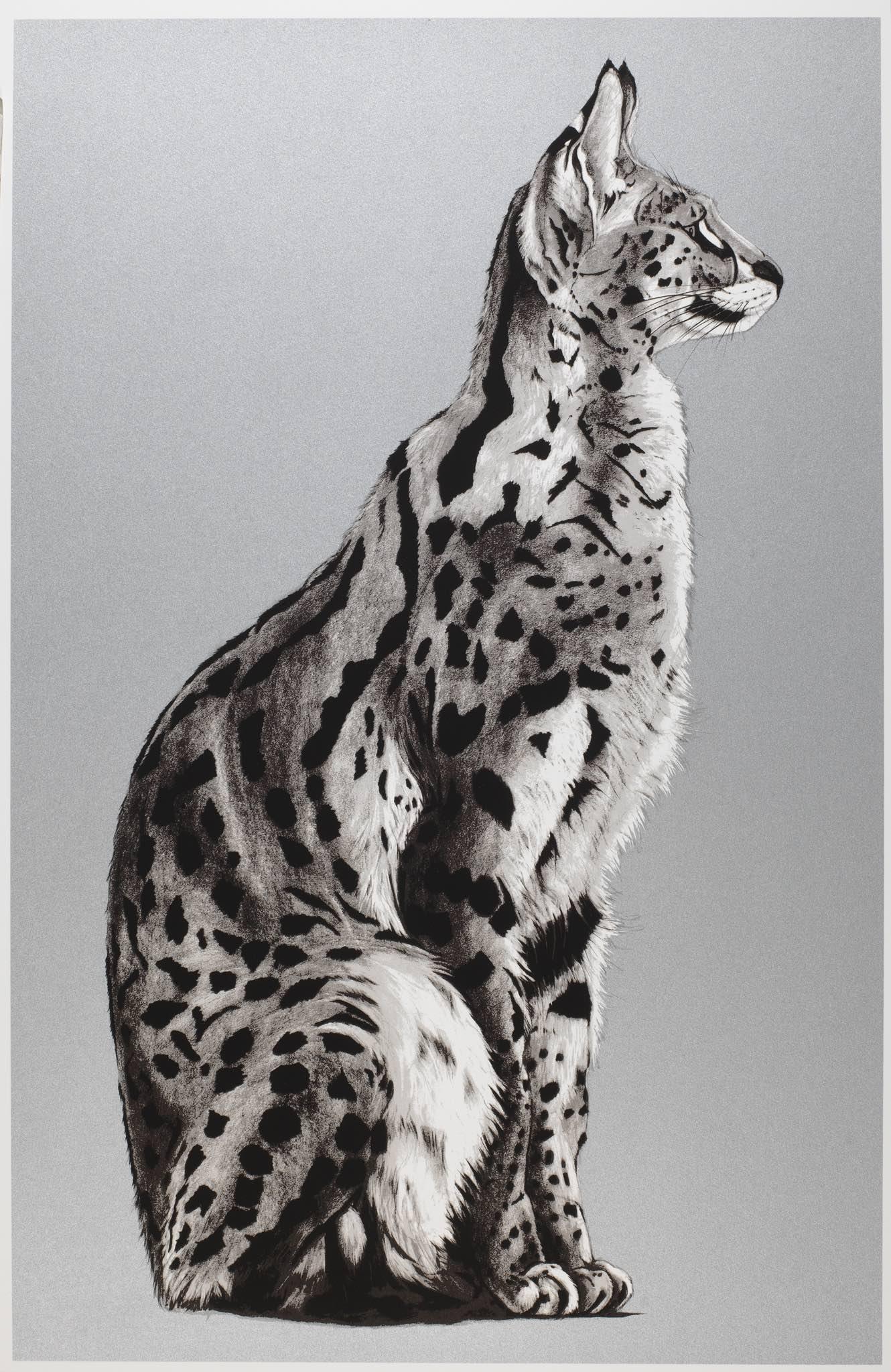 silver serval 1.jpg
