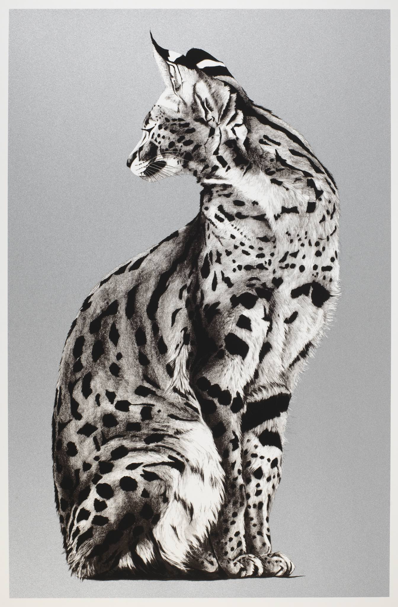 Silver serval 11.jpg