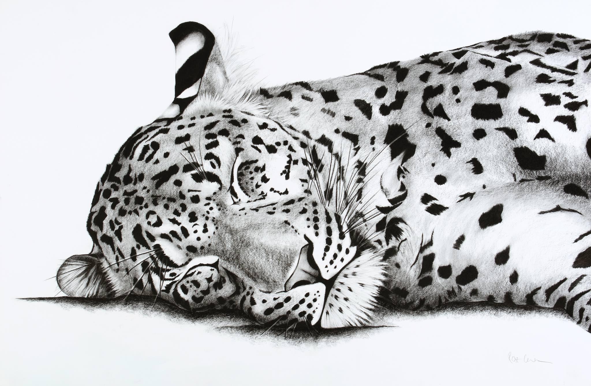 Sleeping Leopard.jpg