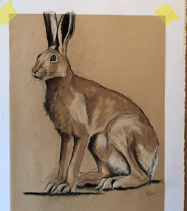 Back in the studio and sketching mad march hare's for the letter H. #alphabeasts #britishwildlife #europeanhare